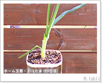 ペット栽培II(ホーム玉葱)27