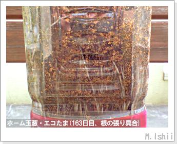 ペット栽培II(ホーム玉葱)61