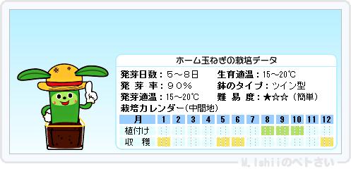 ペトさい(ホーム玉ねぎ)15