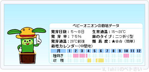 ペトさい(ベビーオニオン)10