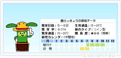 ペトさい(島らっきょう)16