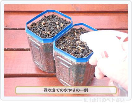 ペトさい(空芯菜)13