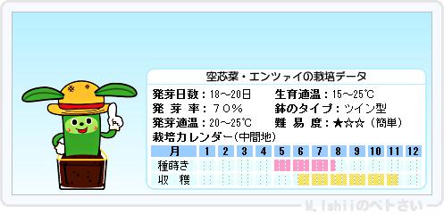 ペトさい(空芯菜)14