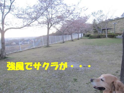 IMG_3725.jpg