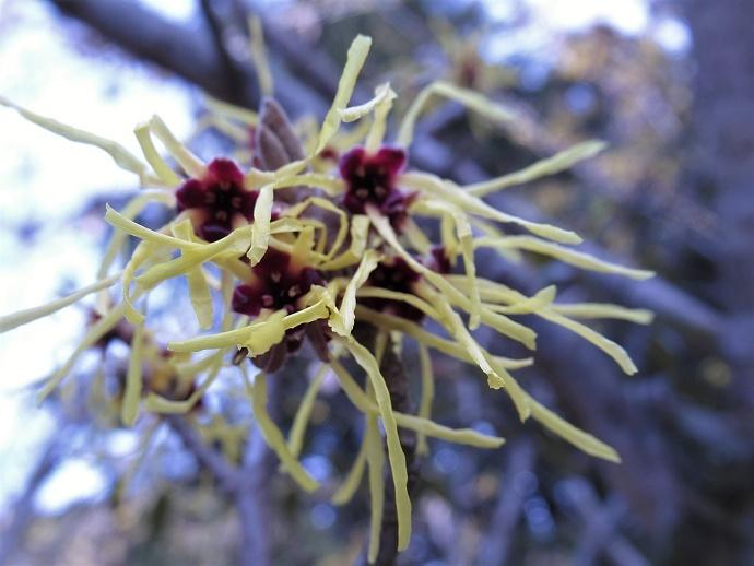 170304春の花2 (1)