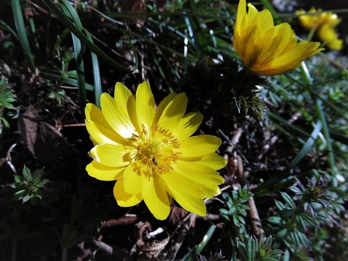 170304春の花2 (5)