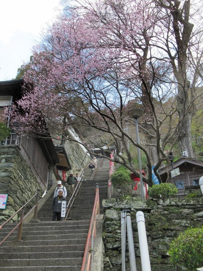 170328紀三井寺 (1)