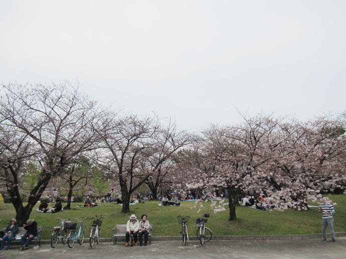 170406花見 (0)