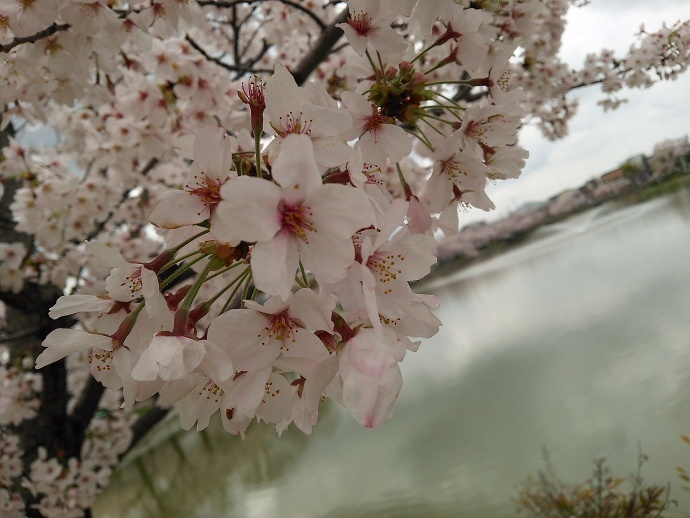 170409花mi (5)