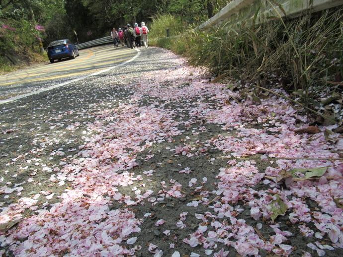 170415甲桜 (7)