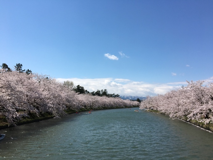 170430弘前桜 (1)