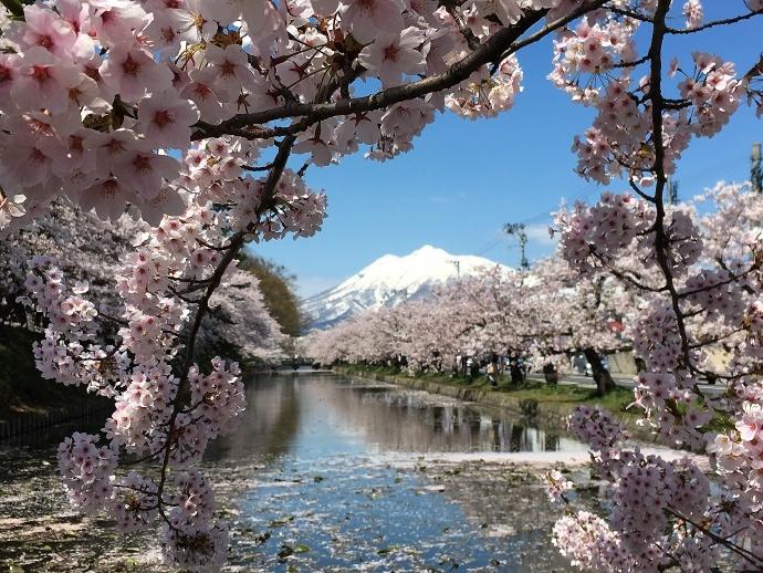 170430弘前桜 (5)