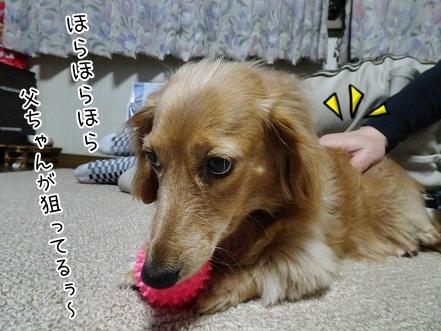 kinako6693.jpg