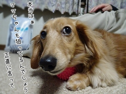 kinako6695.jpg