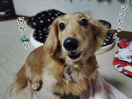 kinako6698.jpg