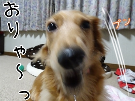 kinako6700.jpg