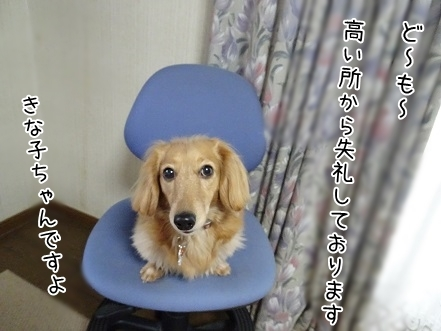 kinako6717.jpg