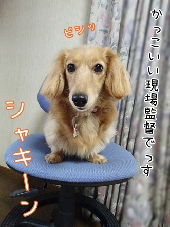 kinako6718.jpg
