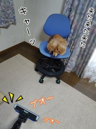 kinako6719.jpg