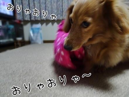 kinako6727.jpg