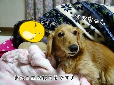 kinako6730.jpg