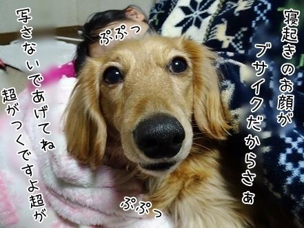 kinako6732.jpg