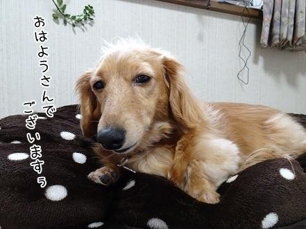 kinako6733.jpg