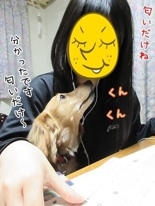 kinako6745.jpg