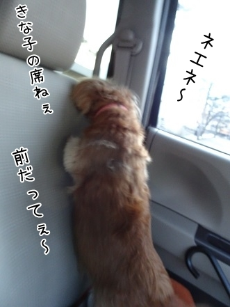 kinako6753.jpg