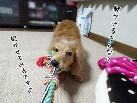 kinako6756.jpg