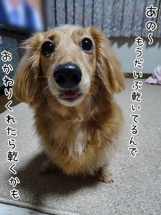 kinako6759.jpg