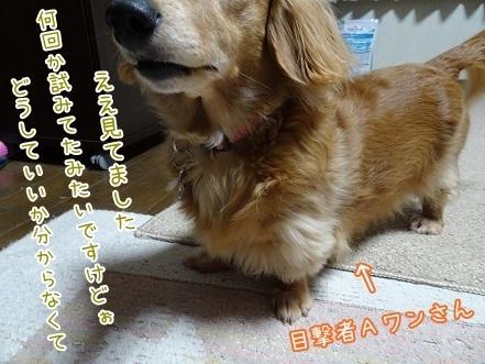 kinako6768.jpg