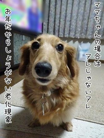 kinako6769.jpg