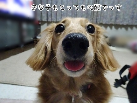 kinako6771.jpg