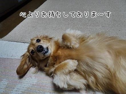 kinako6777.jpg