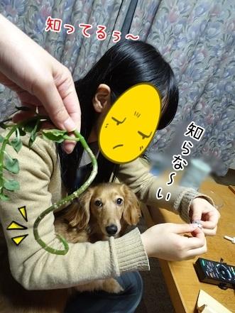 kinako6780.jpg