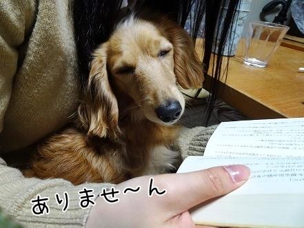 kinako6783.jpg