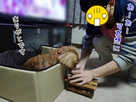 kinako6791.jpg