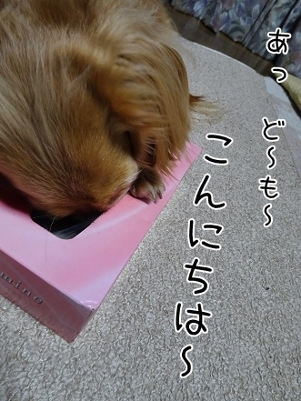 kinako7000.jpg