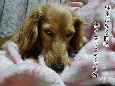 kinako7005.jpg