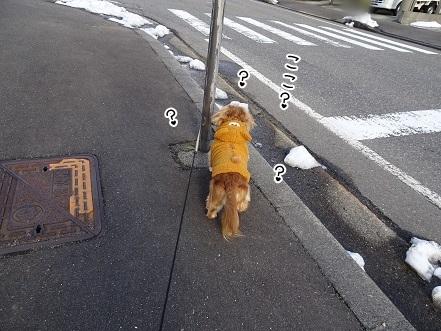 kinako7009.jpg