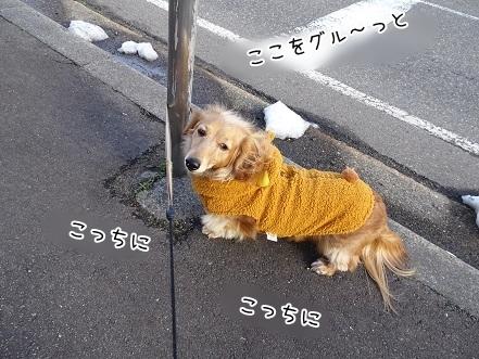 kinako7010.jpg
