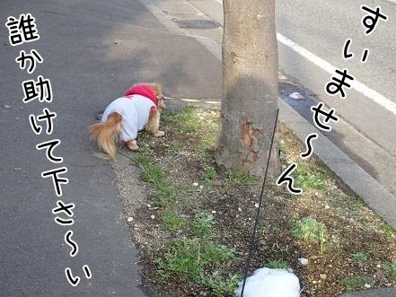 kinako7015.jpg