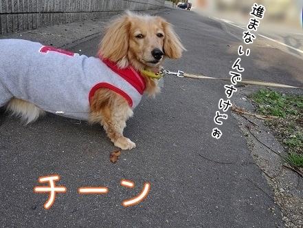 kinako7016.jpg
