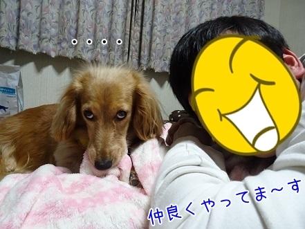 kinako7036.jpg