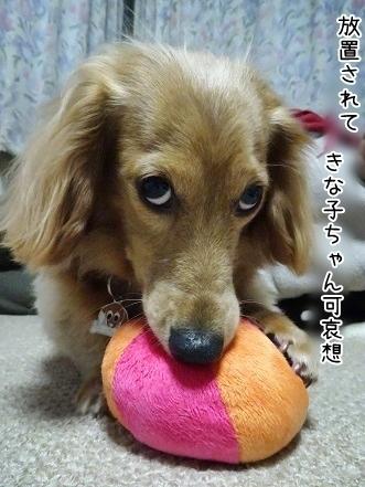 kinako7039.jpg