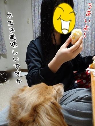 kinako7064.jpg