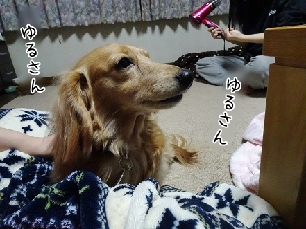 kinako7072.jpg