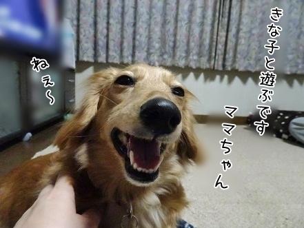 kinako7073.jpg
