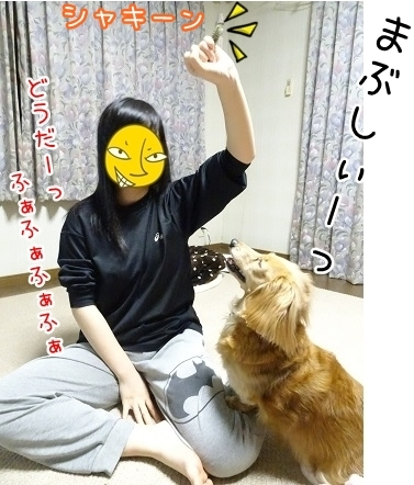 kinako7081.jpg